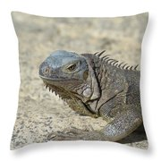 Fantastic Gray Iguana With Spines Along His Back Throw Pillow
