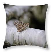 Farfalla Throw Pillow