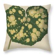Farfugium Grande  Leopard Plant, Green Leopard Plant Throw Pillow