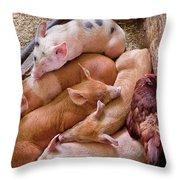 Farm - Pig - Five Little Piggies And A Chicken  Throw Pillow
