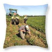 Farmer Inspects Peanut Field Throw Pillow
