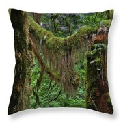 Fascinating Hoh Valley - Hoh Rain Forest Olympic National Park Onp Wa Usa Throw Pillow by Christine Till