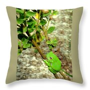 Fat Frog Throw Pillow