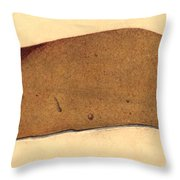 Fatty Liver, Pathology, Illustration Throw Pillow