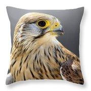 Faucon Crecelle Throw Pillow