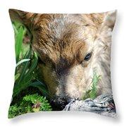 Fawn 168 Throw Pillow