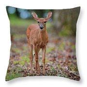 Fawn In Woods At Shiloh National Military Park Throw Pillow