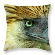 Fearless Philippine Eagle Throw Pillow