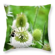 Feasting Bee Throw Pillow