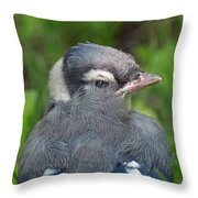 Feathered Jay Throw Pillow