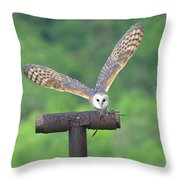 Feathers 6 Throw Pillow