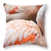 Feathers Of Flamingo Throw Pillow