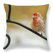 Feathers Ruffled Throw Pillow