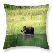 Feeding Moose Throw Pillow