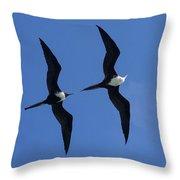 Female And Juvenile Magificent Frigatebird Fregata Magnificens 2 Throw Pillow