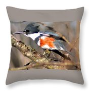 Female Belted Kingfisher Throw Pillow