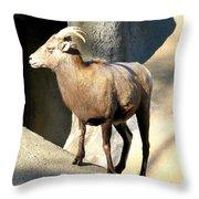 Female Bighorn Sheep Ewe Throw Pillow