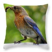 Female Bluebird Feeding Her Brood Throw Pillow
