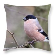 Female Bullfinch Throw Pillow