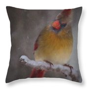Female Cardinal In The Winter Throw Pillow