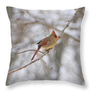 Female Cardinal In Winter Throw Pillow
