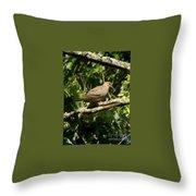 Female Dove Resting On Limb Throw Pillow