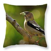 Female Evening Grosbeak - 365-55 Throw Pillow