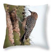 Female Gila Woodpecker-img__2691-2016 Throw Pillow