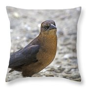 Female Grackle With Attitude Throw Pillow