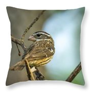 Female Grossbeak Looking Back Throw Pillow