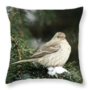 Female House Finch On Snow Throw Pillow