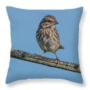 Female House Finch Resting Throw Pillow