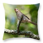 Female House Sparrow Throw Pillow