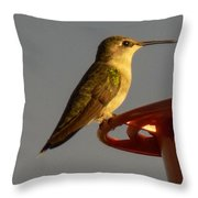 Female Hummingbird Throw Pillow