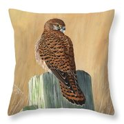 Female Kestrel Study Throw Pillow