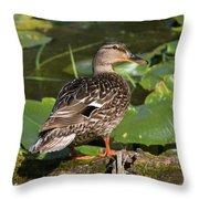 Female Mallard Among Lily Pads Throw Pillow