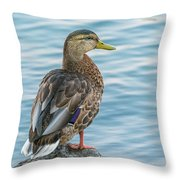 Female Mallard At The River Throw Pillow