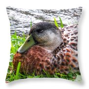 Female Mallard Duck Resting 4 Throw Pillow