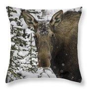 Female Moose In A Winter Wonderland Throw Pillow