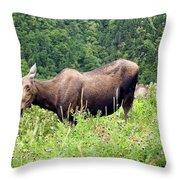 Female Moose Throw Pillow
