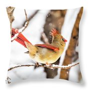 Female Northern Cardinal In The Snow Throw Pillow