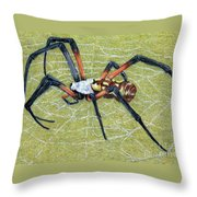 Female Orb Spider -1 Throw Pillow