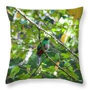 Female Quetzal Throw Pillow