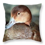 Female Redhead Duck Throw Pillow