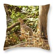 Female Ring-necked Pheasant - Phasianus Colchicus Throw Pillow