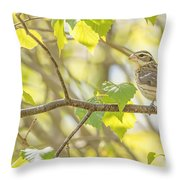 Female Rose-breasted Grosbeak Throw Pillow