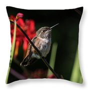 Female Rufous Hummingbird Throw Pillow