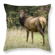 Female Wapiti Throw Pillow