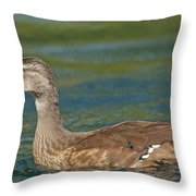 Female Wood Duck Throw Pillow