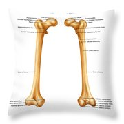 Femur, Anterior And Posterior View Throw Pillow